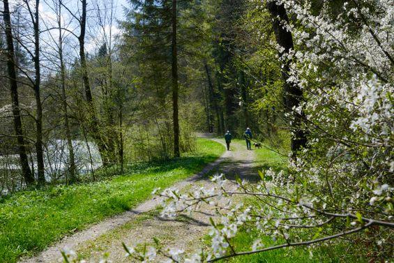 wandern im schwarzwald rundwege